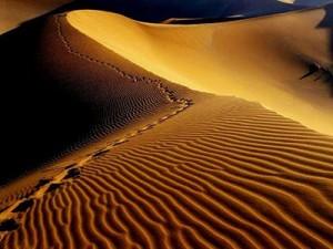 mesr-desert-gh01