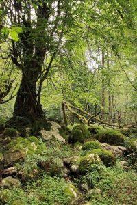 جنگل نوردی سنگچال به دیوا