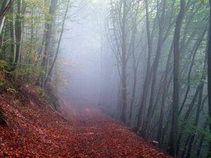 جنگل نوردی الیمستان