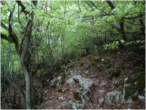 جنگل نوردی کردیچال